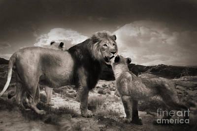 Photograph - Lion Family by Christine Sponchia