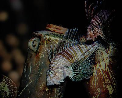 Studio Grafika Zodiac - Lion Fish at Mystic Aquarium by Andrea Swiedler