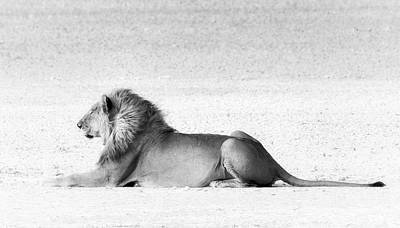 Art Print featuring the photograph Lion In Wait by Rand