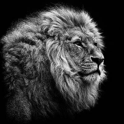 Photograph - Lion On Black Background by © Christian Meermann