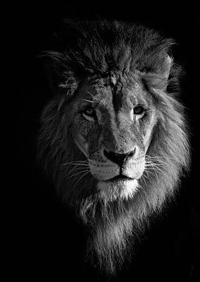 Animal Animal Photograph - Lion Portrait by © Christian Meermann