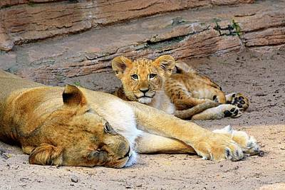 Photograph - Lioness And Cubs by Lisa Wooten