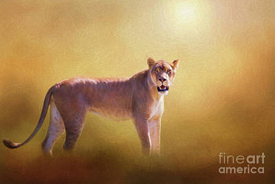 Digital Art - Lioness In The Golden Sun by Sharon McConnell