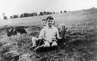 Photograph - Little Beatle by Keystone
