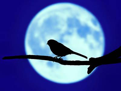 Photograph - Little Bird Blues by Bob Orsillo