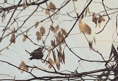 Photograph - Little Bird Of Faith by The Art Of Marilyn Ridoutt-Greene