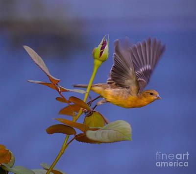 Photograph - Little Bird by Sherry Little Fawn Schuessler