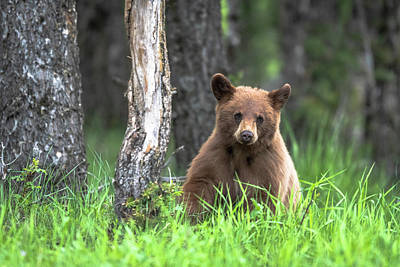 Photograph - Little black bear by Russell Cody