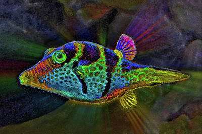 Little Colored Fish. Abyss. Original
