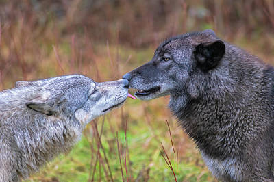 Photograph - Little Kiss For My Wolf Buddy by Dan Friend