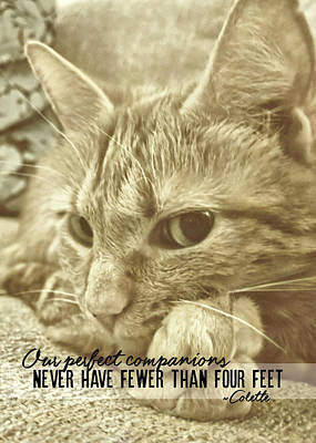 Photograph - Little Lily Quote by JAMART Photography