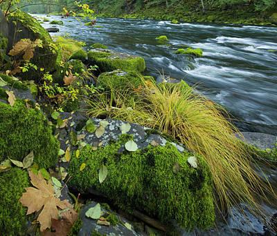 Photograph - Little North Santiam River, Oregon by Eastcott Momatiuk