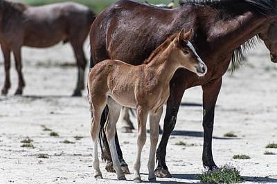 Photograph - Little Pony by Paula Mitchell