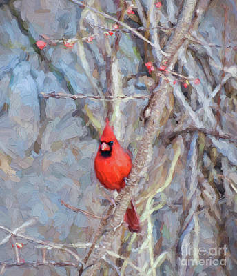 Photograph - Little Red Bird Blessings  by Kerri Farley