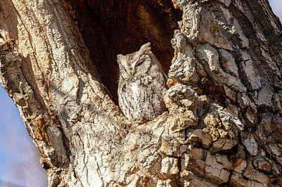 Photograph - Little Screech Owl Keeping Watch by Tony Hake