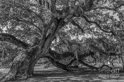 Photograph - Live Oak Tree - Magnolia Cemetery by Dale Powell