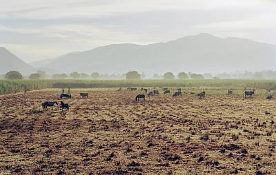 Antilles Photograph - Livestock On A Farm Land Near Jacmel by Cultura Exclusive/philip Lee Harvey