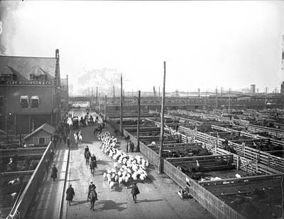 Photograph - Livestock Pens At The Stockyards by Chicago History Museum