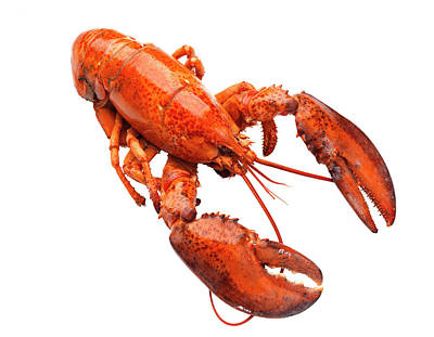 Lobster On White Background Art Print by Johner Images