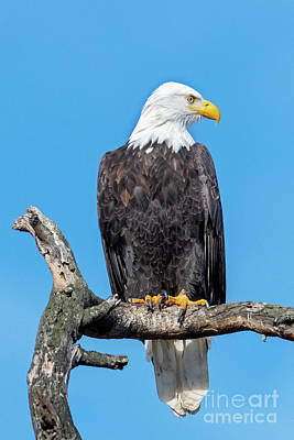Photograph - Lofty Perch by Mike Dawson