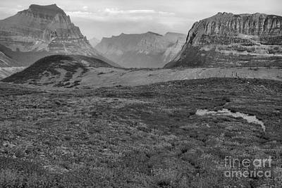 Photograph - Logan Pass Wildflower Blanket Black And White by Adam Jewell
