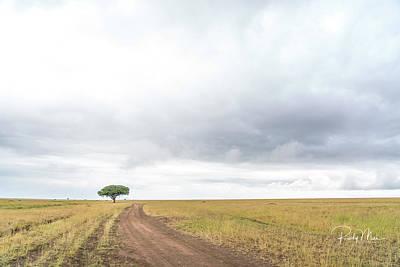 Photograph - Lone Acadia by Rudy Mui