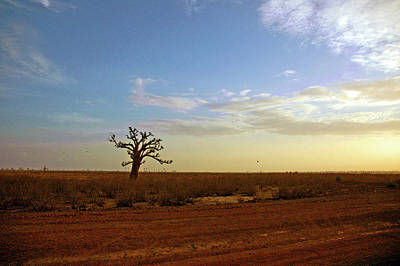 Photograph - Lone Baobab Tree by Mark Duehmig