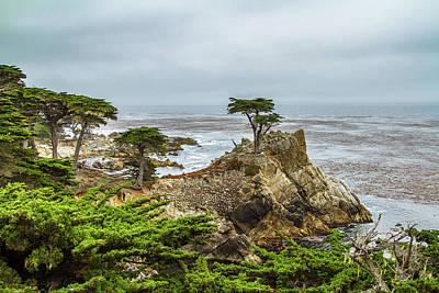 Photograph - Lone Cypress by Stefan Mazzola