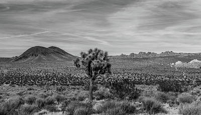 Photograph - Lone Joshua Tree - Pleasant Valley Bw Alt Crop by Peter Tellone