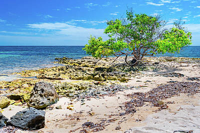 Photograph - Lone Shore Tree by Debbie Ann Powell