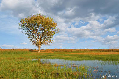 Photograph - Lone Tree By A Wetland by Jeff Goulden