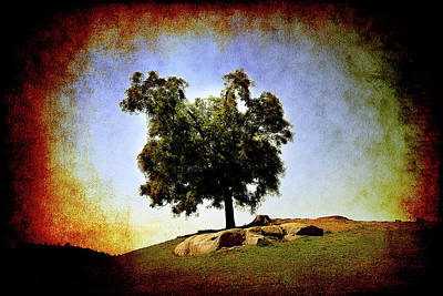 Photograph - Lone Tree On The Hill by Milena Ilieva