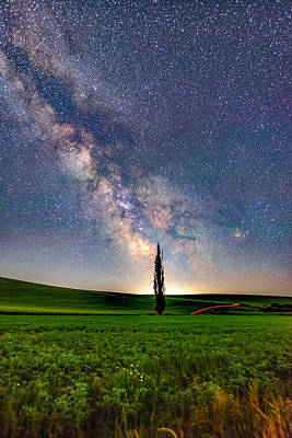 Wall Art - Photograph - Lone Tree / Resistance 2 by Jeremy Tamsen