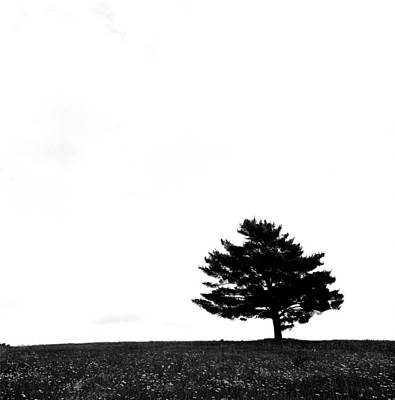 Photograph - Lone Tree by Robert Natkin