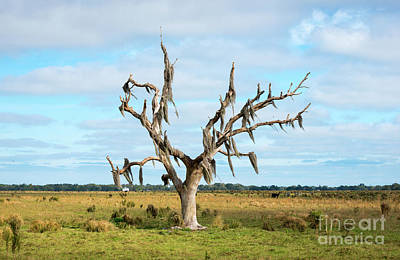 Photograph - Lone Tree With Spanish Moss by Les Palenik