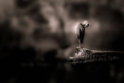 Photograph - Lonely by Christine Sponchia
