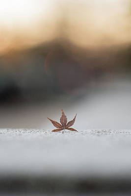 Photograph - Lonely Fall Leaf by Doug Ash