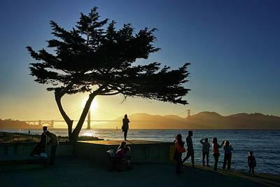 Photograph - Lonely Tree At Crissy Field by Quality HDR Photography
