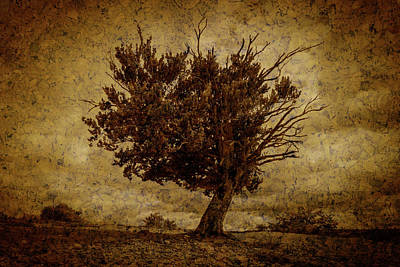 Digital Art - Lonely Tree Dying Textured by Vicen Fotografia