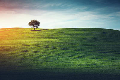 Lonely Tree In Tuscany Art Print by Borchee