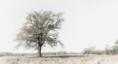 Photograph - Lonely Tree #minimalism by Andrea Anderegg