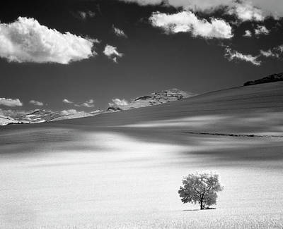 Photograph - Lonely Tree On Mountain by Martin Zalba