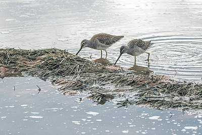 Photograph - Long-billed Dowitchers 0849-010919 by Tam Ryan