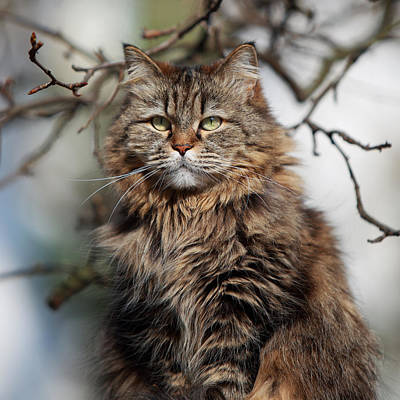 Sunlight Photograph - Longhair Cat In Sunshine by Achim Mittler, Frankfurt Am Main