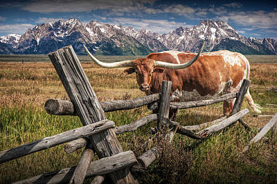 Photograph - Longhorn Steer In A Pasture By A Wood Log Fence In The Grand Tetons by Randall Nyhof