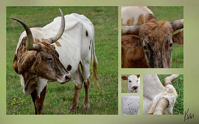 Photograph - Longhorns by Karen Rispin