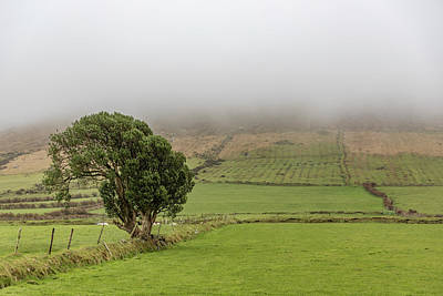 Photograph - Lonley Tree Dingle Ireland  by John McGraw