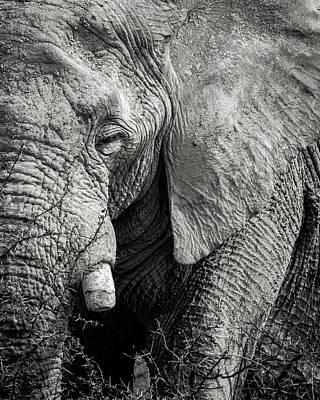 Photograph - Look Of An Elephant by Dalibor Hanzal
