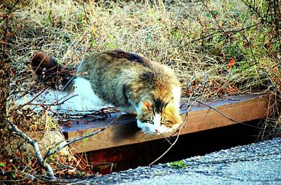 Photograph - Looking For Mice by Cynthia Guinn