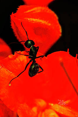 Photograph -  Looking For My Friend Ant Closeup by Meta Gatschenberger